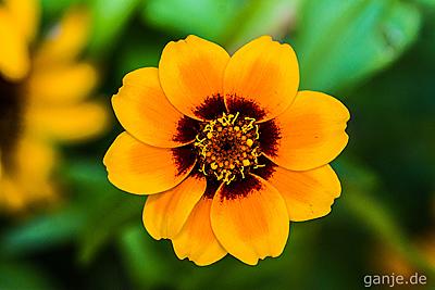 Bilder Pflanzen